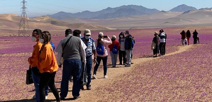 Además, tuvieron la oportunidad de visitar un camping agroturístico, artesanía totora y la caleta Pajonales.